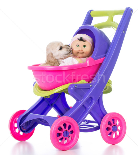puppy in a stroller Stock photo © willeecole