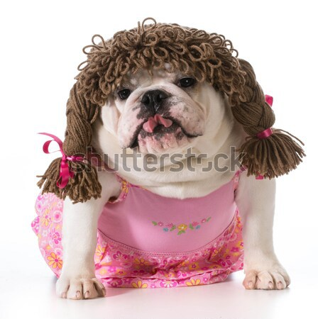 dog with attitude - female english bulldog wearing wig with funny expression Stock photo © willeecole