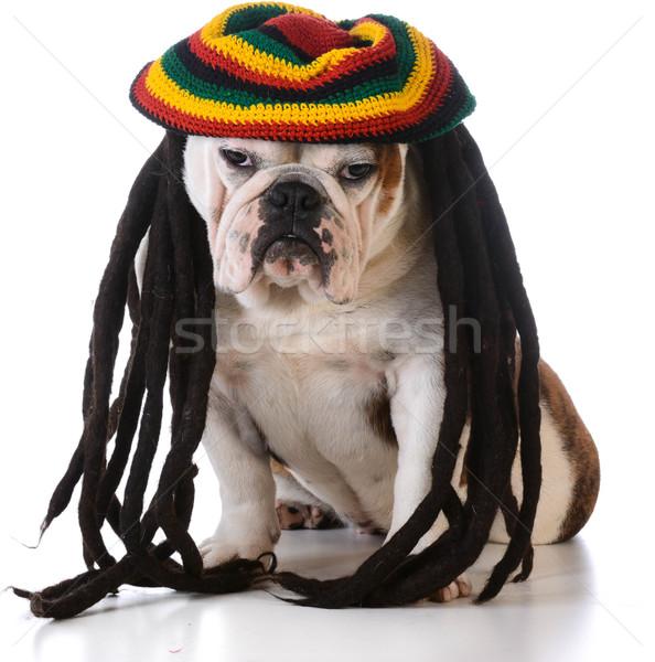 Grappig hond pruik witte gezicht jonge Stockfoto © willeecole