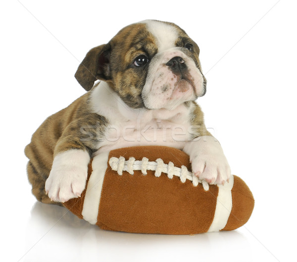 cute puppy with stuffed toy Stock photo © willeecole