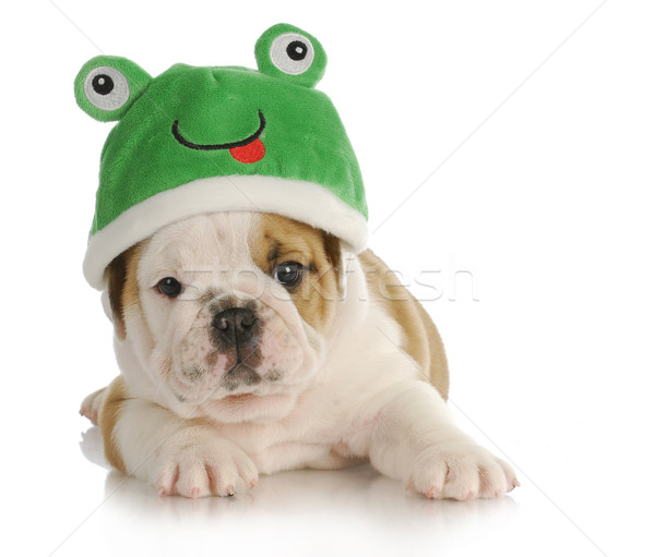 puppy frog Stock photo © willeecole