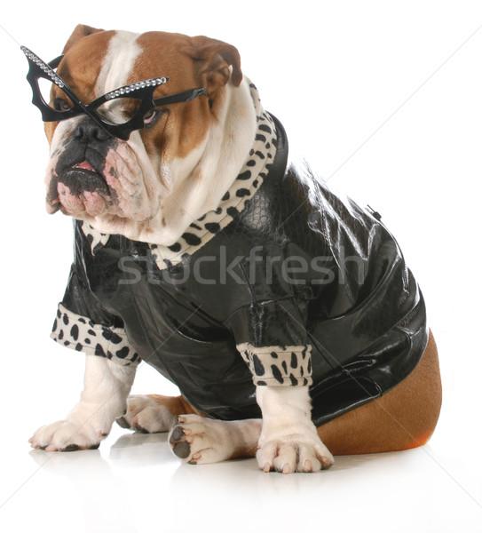 Diva hond Engels bulldog omhoog zoals Stockfoto © willeecole