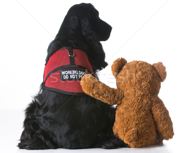 therapy dog Stock photo © willeecole