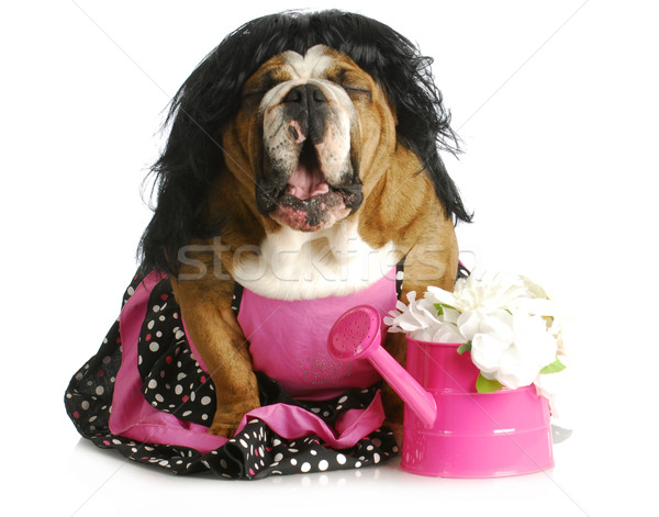 dog complaining Stock photo © willeecole