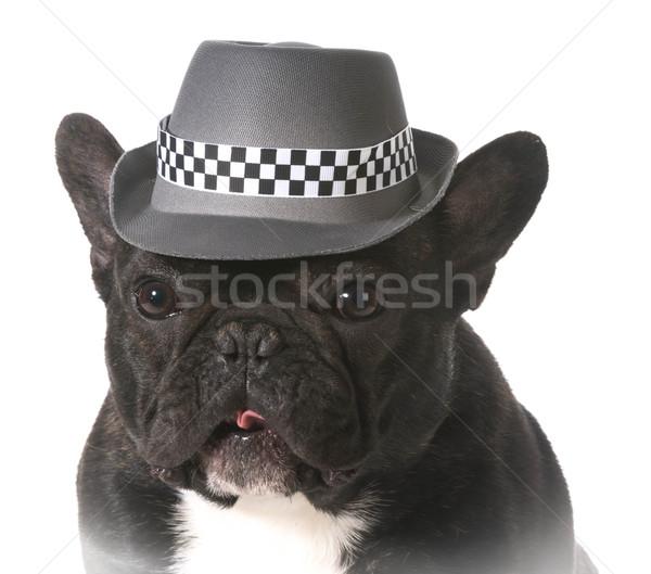 Köpek fötr şapka fransız buldok şapka Stok fotoğraf © willeecole