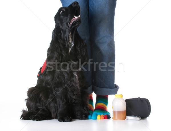 Ouvrir la chien diabétique séance Photo stock © willeecole