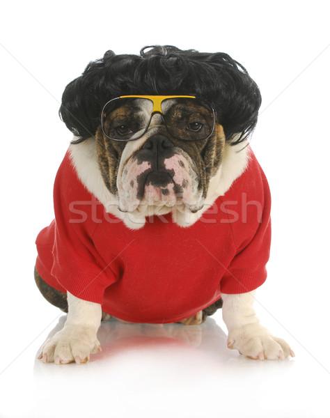 Foto stock: Engraçado · cão · inglês · buldogue · preto