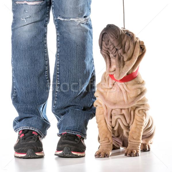 犬の訓練 中国語 座って 女性 脚 訓練 ストックフォト © willeecole