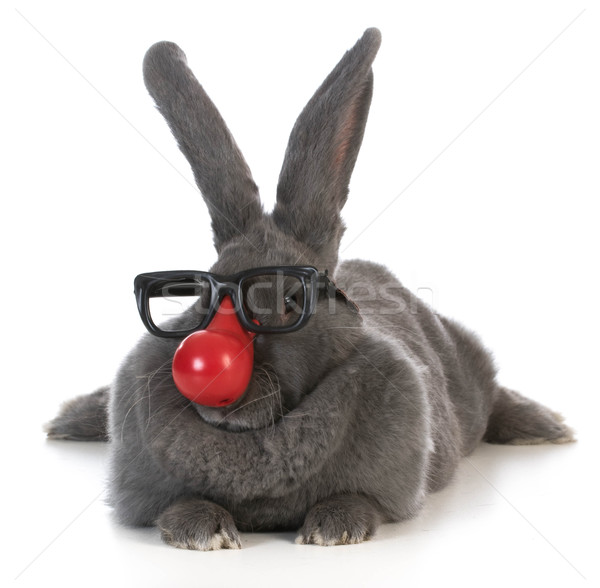 funny bunny Stock photo © willeecole
