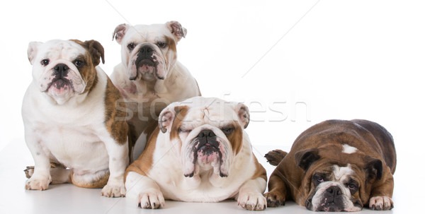 Vier Engels geïsoleerd witte familie vrouwelijke Stockfoto © willeecole