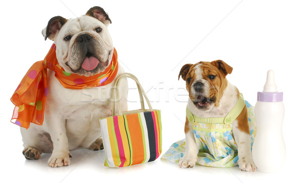 Gyereknevelés bulldog anya kutyakölyök baba üveg Stock fotó © willeecole