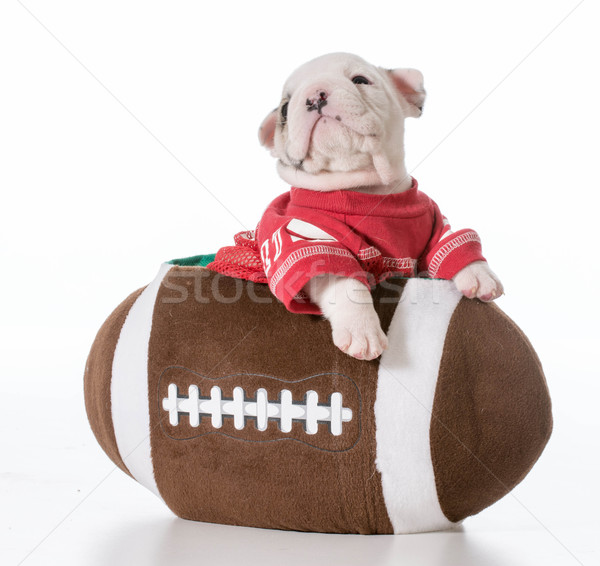 sports hound Stock photo © willeecole