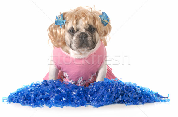 cheerful dog Stock photo © willeecole