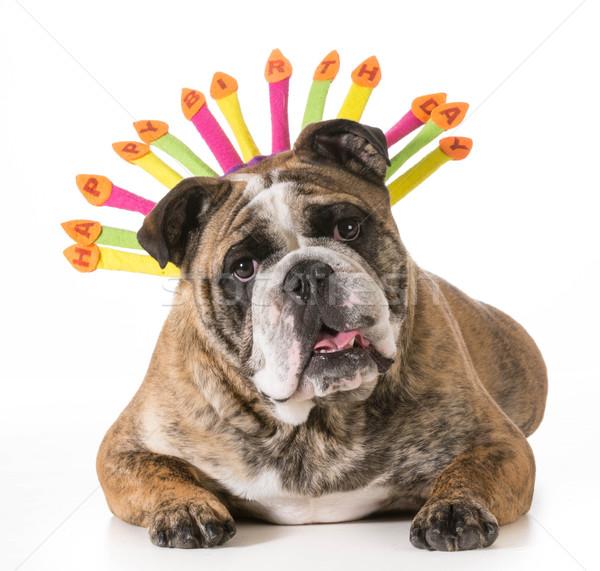 birthday dog Stock photo © willeecole