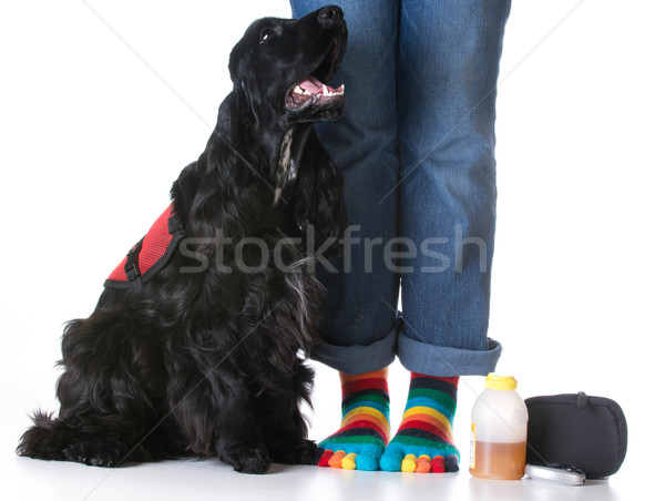 service dog Stock photo © willeecole