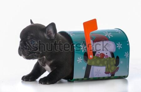Takarítás felfelé új kutyakölyök amerikai ül Stock fotó © willeecole