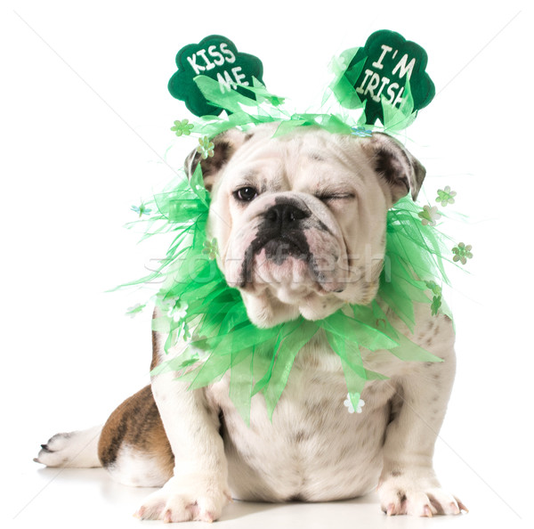 St. Patricks Day dog Stock photo © willeecole