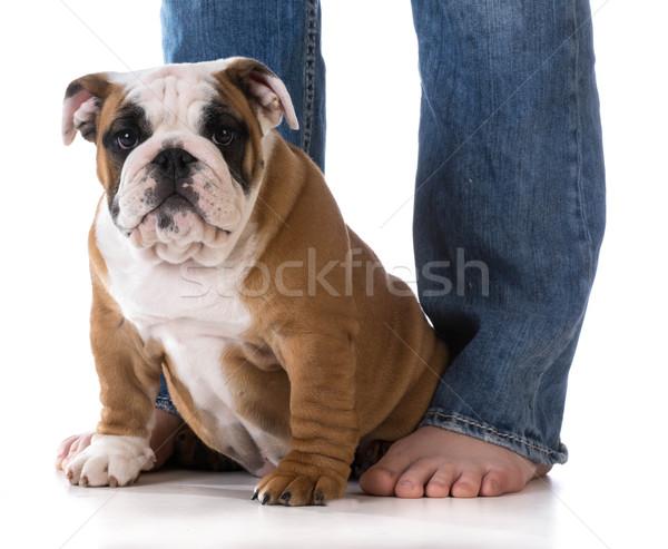 Mujer perro piernas cachorro sesión pies Foto stock © willeecole