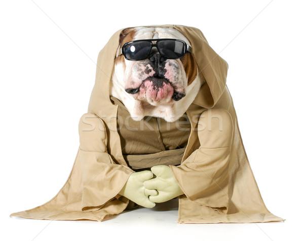 dog wisdom Stock photo © willeecole