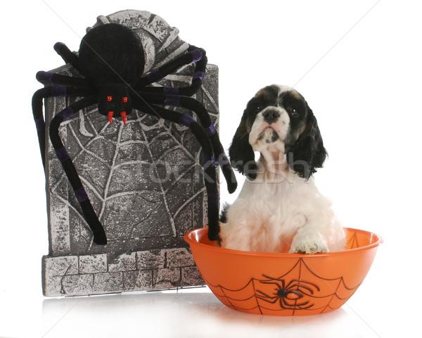 halloween puppy Stock photo © willeecole