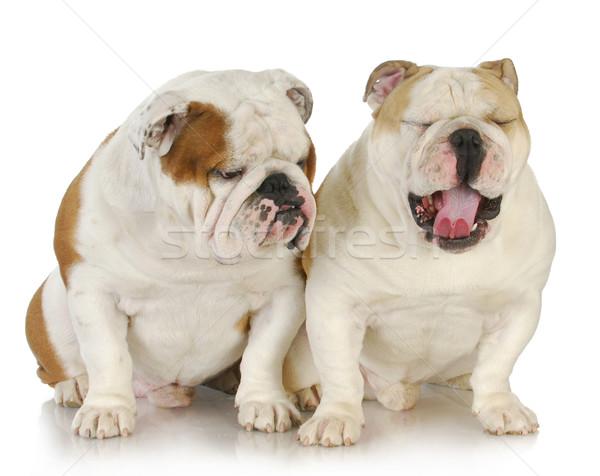 два мужчины отцом сына На 25 1 год собака Сток-фото © willeecole