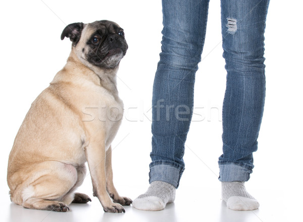 dog sitting at owners feet Stock photo © willeecole