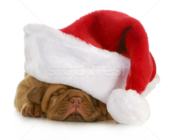 santa puppy Stock photo © willeecole