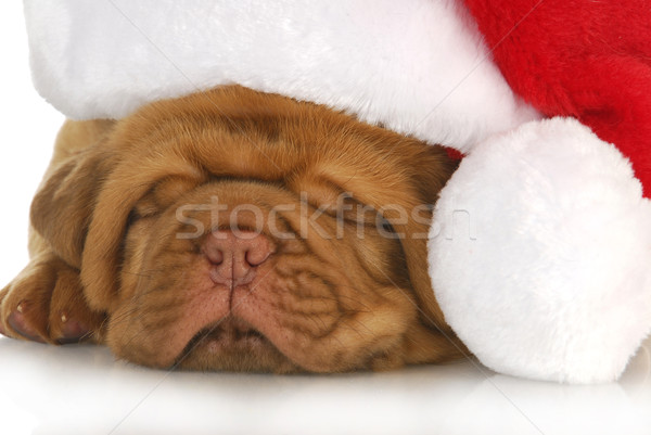 puppy santa Stock photo © willeecole