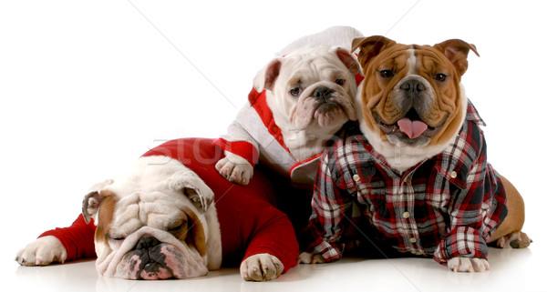 ストックフォト: 犬 · 家族 · 英語 · ブルドッグ · 父 · 母親