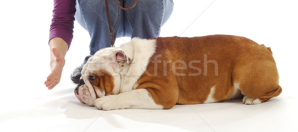 obedience training Stock photo © willeecole