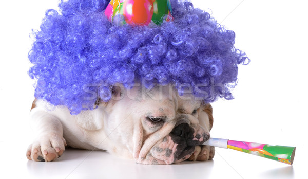 5906949 Birthday Dog By Willeecole Stock Photo
