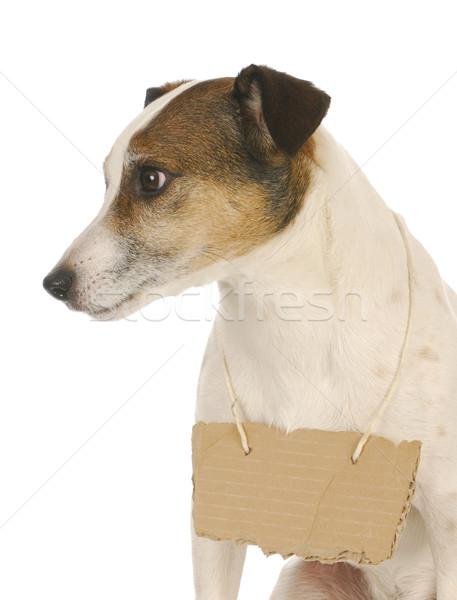 Foto stock: Perro · signo · jack · russell · terrier · cartón · alrededor