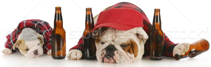 пьяный собаки английский бульдог воды бутылку Сток-фото © willeecole