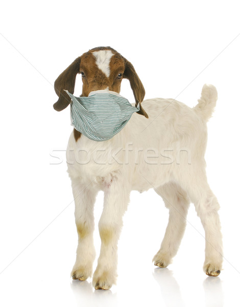Veterinário cuidar fazenda cabra criança Foto stock © willeecole