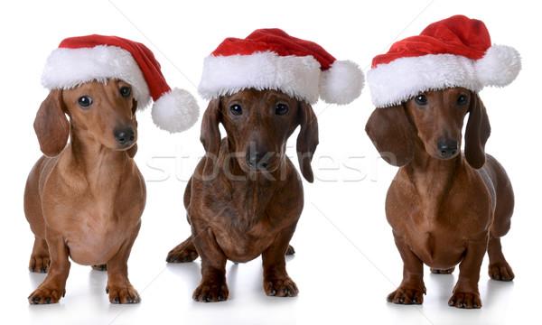 Stock photo: christmas dogs