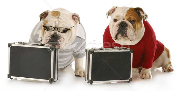 two working dogs Stock photo © willeecole