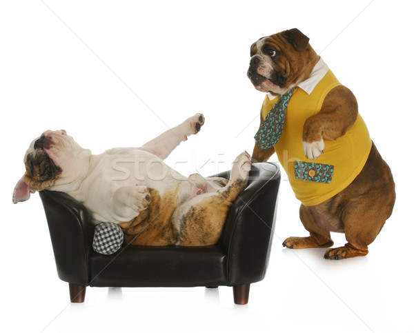 Hond psychologie bulldog permanente naar ander Stockfoto © willeecole