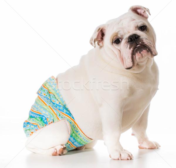 Perro calor temporada pantalones aislado Foto stock © willeecole