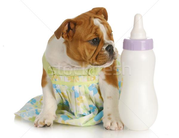 bottle feeding puppy Stock photo © willeecole