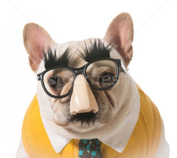 Hond vermommen frans bulldog gelukkig grappig Stockfoto © willeecole