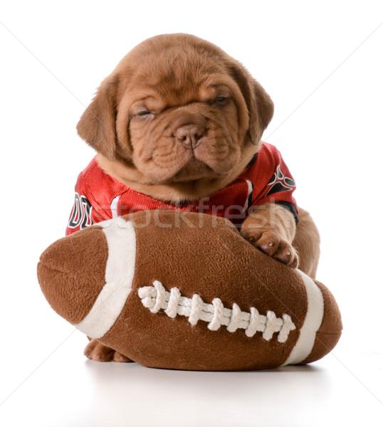 спортивных гончая щенков футбола мальчика Сток-фото © willeecole