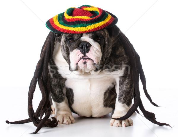 Kutya visel paróka vicces fehér arc Stock fotó © willeecole
