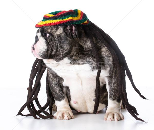 Grappig hond pruik witte partij Stockfoto © willeecole