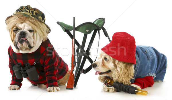 hunting dogs Stock photo © willeecole