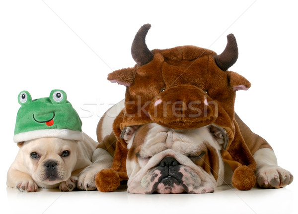 cute dogs Stock photo © willeecole