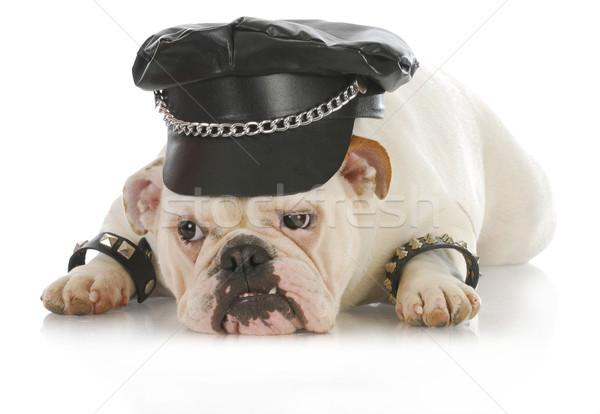 Szívós kutya angol bulldog felfelé ahogy Stock fotó © willeecole