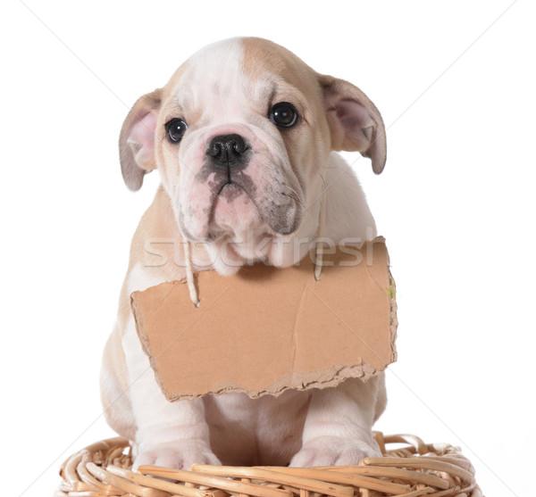 ペット 採用 ブルドッグ 子犬 着用 段ボール ストックフォト © willeecole