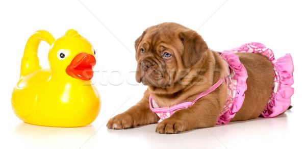 dog bath time Stock photo © willeecole