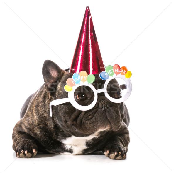 Doğum günü köpek fransız buldok şapka Stok fotoğraf © willeecole