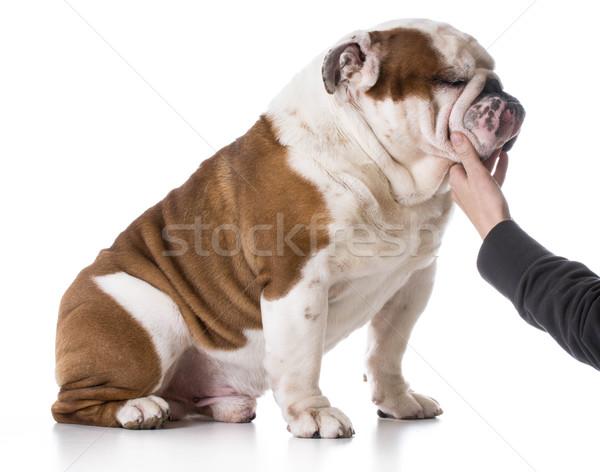 animal bond Stock photo © willeecole